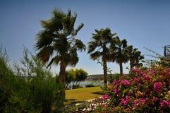 kust- cyprus lanscape Arkivfoto