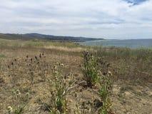 Kust duidelijk Zuidelijk Californië met wildflowers en oceaanmeningen stock afbeelding