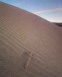 Kust- dyn, Kalifornien Arkivbilder