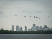 Kust- fåglar Cartagena Arkivbilder