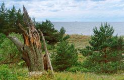Kust för baltiskt hav, brant havskust, bevuxen kust royaltyfria foton