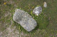 Kust- flora, England Arkivfoton