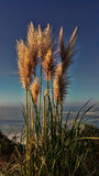 Kust- gräs Arkivbild