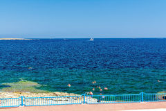Kust i Bugibba, Malta Royaltyfri Fotografi