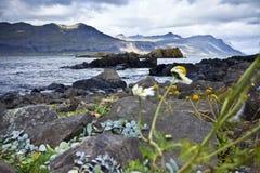 kust iceland royaltyfria bilder