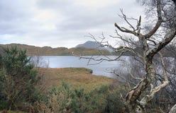 Awry treen i skott landskap Arkivfoto