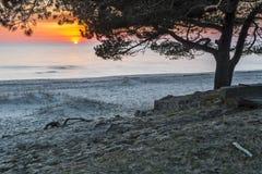 Kust- landskap på gryning, Östersjön, Europa royaltyfri bild