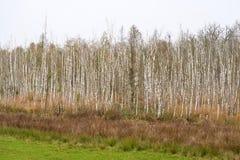 Kust- landskap på Zingst Arkivfoton