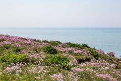 Kust- landskap, Sussex royaltyfria bilder