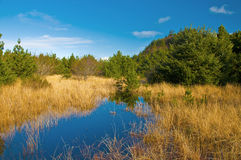 kust- marsh Royaltyfri Fotografi