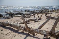 Kust met gevallen bomen Stock Foto's