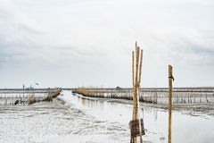 Kust met lage waterspiegel, shell landbouwbedrijf royalty-vrije stock afbeeldingen