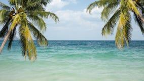 Kust met palmen en een strand Stock Foto
