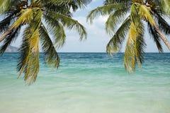 Kust met palmen en een strand Stock Foto's