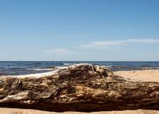 Kust met zand en hout Royalty-vrije Stock Foto's