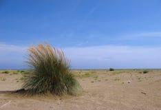 kust- miljö för buske fotografering för bildbyråer