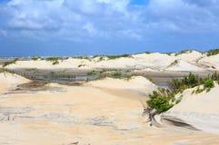Kust- miljöbakgrund North Carolina Royaltyfri Fotografi