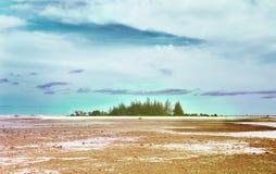 Kust- områden är det torra havet men till några träd tidigt Royaltyfri Fotografi