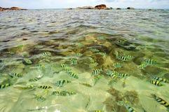 Kust overzees. Rotsen onder het water Royalty-vrije Stock Afbeeldingen