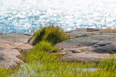 Kust- plats med detaljerat gräs i förgrund arkivbild