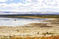 Kust- sikt av den mono sjön, Kalifornien, USA Arkivfoto