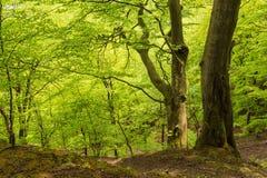 Kust- skog Royaltyfria Bilder