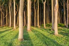 Kust- skog på den Östersjön kusten Arkivbilder