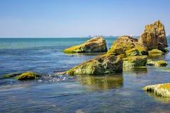 Kust- sten med gröna alger Sten som täckas med gröna alger Royaltyfri Foto