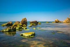 Kust- sten med gröna alger Sten som täckas med gröna alger Royaltyfri Fotografi