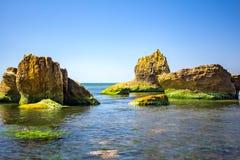Kust- sten med gröna alger Sten som täckas med gröna alger Royaltyfri Bild