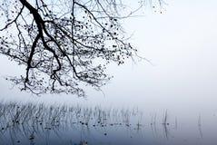 Kust- treefilialer och vass i dimma arkivbilder