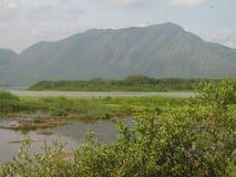 Kust- våtmark för Unare lagun i Venezuela royaltyfri fotografi