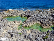 Kust van koralen jamaïca stock foto's