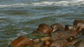Kust van overzees met groen zeewier en bemost op stenen in water stock videobeelden