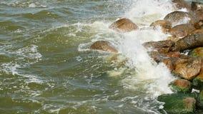 Kust van overzees met groen zeewier en bemost op stenen in water stock footage