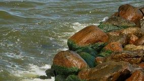 Kust van overzees met groen zeewier en bemost op stenen in water stock video