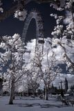Kust van Theems met de Big Ben Stock Foto's