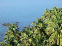 Kust van tropische palm Stock Foto's