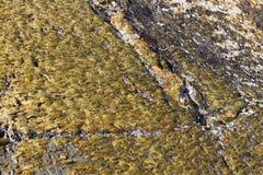 Kust- vegetation Royaltyfri Fotografi