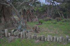 Kust- Whitetail Royaltyfri Foto