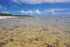 Kustatoll av Rangiroa Tuamotu franska Polynesien royaltyfria foton