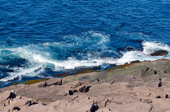 Kusten av Newfoundland Royaltyfria Foton