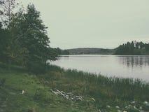 Kusten av sjön som är bevuxen med cattail Arkivfoto