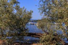Kusten van Meer Maggiore met installaties, zon en boten Royalty-vrije Stock Afbeeldingen