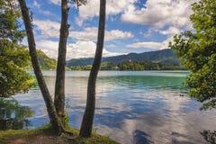 Kuster av Bled sjön i Slovenien Royaltyfria Foton