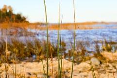 Kusterna av Lake Huron Arkivbild