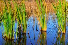 Kusterna av Lake Huron Arkivbilder