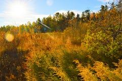 Kusterna av Lake Huron Royaltyfria Foton