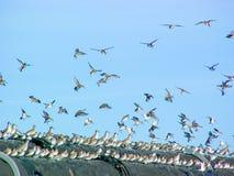 Kustfåglar som Roosting royaltyfri foto
