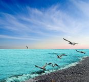 kustfiskmåshav under Royaltyfri Fotografi